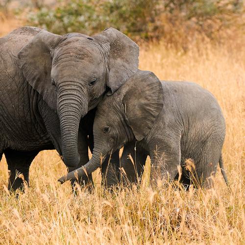 elefantes-kenia-salvaje
