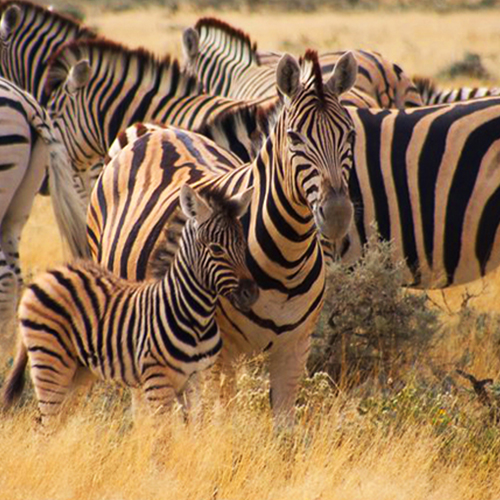 portada-namibia-aire-deskontalia-viajes